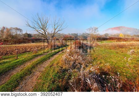 Rural Landscape On A Foggy Sunrise. Beautiful Countryside Scenery In Autumn Season. Trees In Fall Fo
