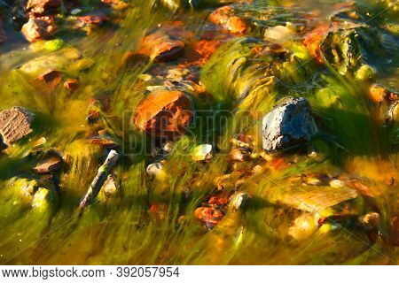 Scenic Background With Filamentous Algae. Spirogyra. Pollution Of Water With Mineral Fertilizers. En
