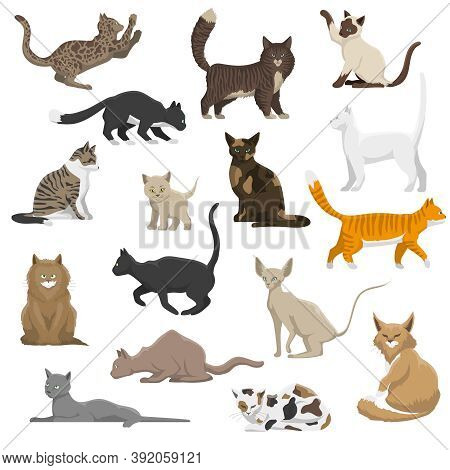 Domestic Popular And Rare Exotic Cat Breeds Flat Icons Collection With Persian And Maine Coon Isolat
