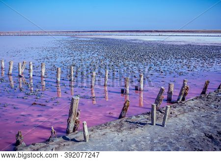 Salt, Brine And Mud Of Pink Salty Sivash Lake Near Azov Sea, Colored By Micro Algae Dunaliellasalina
