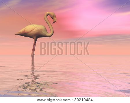 One flamingo standing peacefully alone in the water by cloudy sunset poster