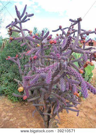 Colorful Dreadlock Cactus
