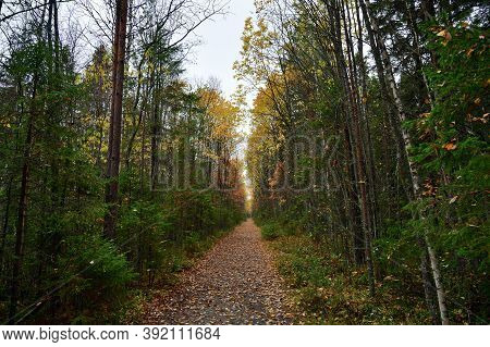 Foot Path In Autumn Forest To Zalavruga Archeological Site, Belomorsk, Karelia, Russia