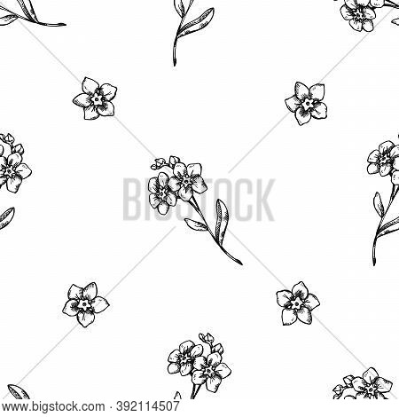 Seamless Pattern With Black And White Forget Me Not Flower Stock Illustration