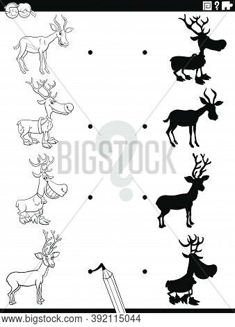 Black And White Cartoon Illustration Of Match The Right Shadows With Pictures Educational Task For C