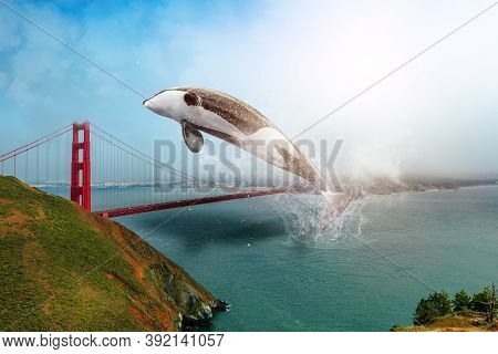 Killer Whale Jumping On Golden Gate Bridge, California, United States. The Golden Gate Is A Symbol O