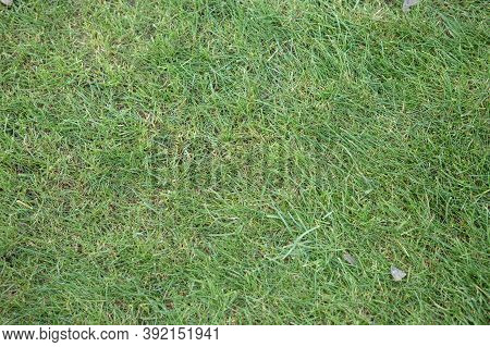 Grass Texture - Close-up Of A Fragment Of Slightly Worn And Neglected Grass