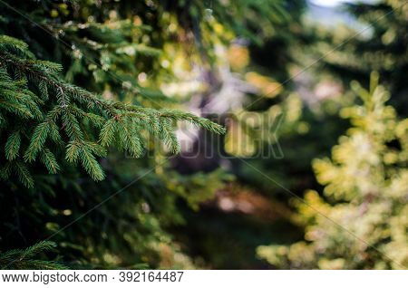 Landscape Of Autumn Trees In The Forest Outdoors