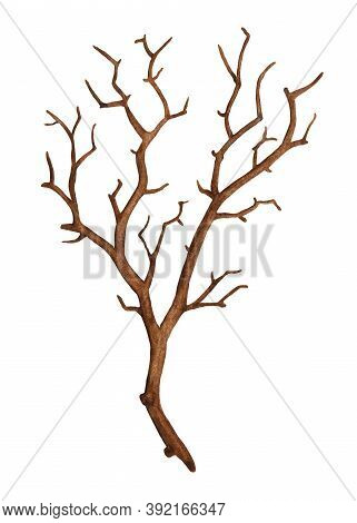 Watercolor Winter Bare Tree Branch Without Leaves. Dry Twig, Leafless Bough, Old Dead Snag. Hand Dra