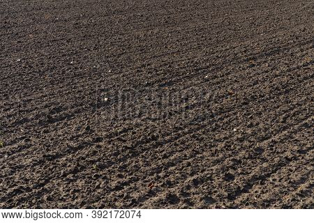 Freshly Plowed Spring Field For Planting Vegetable Seeds. The Furrows Extend Diagonally Into The Dis