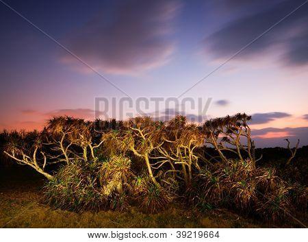 Tropical Plants at dusk in Manzamo, Okinawa