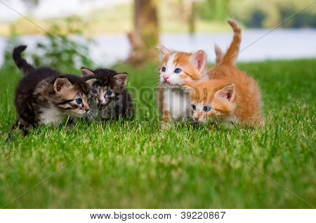 Four little kittens in garden