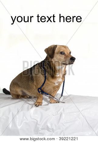 a puppy who has worked for veterinary poster
