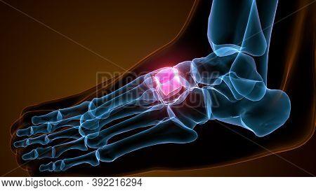 3d Illustration Of The Human Skeleton Medial Cuneiform Bone