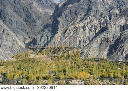 The Houses Of A Village In Ladakh, India Are Hidden By Poplar Trees. The Rocky Slopes Of The Ladakh
