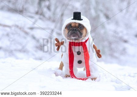 Funny French Bulldog Dog Dressed Up As Snowman With Funny Full Body Suit Costume With Red Scarf, Fak