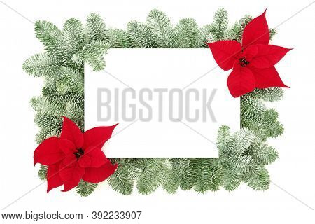 Thanksgiving & Christmas poinsettia flower border with snow covered spruce fir on white background. Festive layout for the holiday season. Flat lay, top view, copy space.