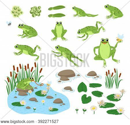 Set Of Cartoon Hungry Frog Sad, Smile, Resting And Hunting. Happy Frog Sit And Jump Clip Art, Differ