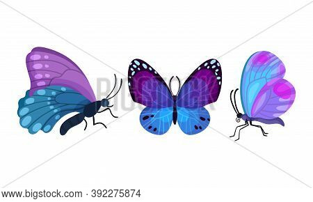Fluttering Butterfly With Brightly Coloured Wings Vector Set