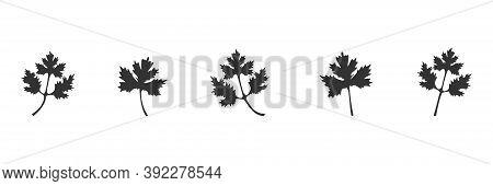 Coriander Black Icon Set. Parsley Leaves Vector Illustration Isolated On White. Cilantro Symbol Coll