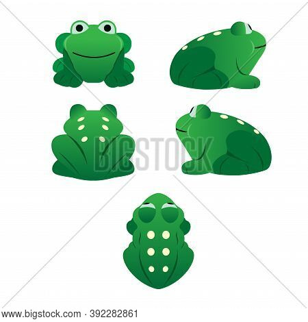 Collection Of Green Frogs Top View, Front, Left, Right And Back Set Cartoon Vector Set On A White Ba