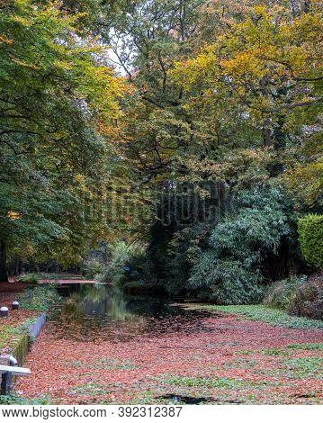 Autumn Colours Alongside The Basingstoke Canal, Near Woking, Surrey, Uk