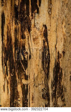 Bark Of Tree Texture. Wood Bark Texture. Part Of A Tree In Daylight. The Invoice For Designers. Stru