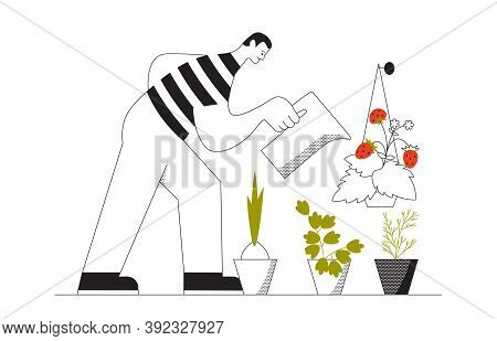 Happy Man Watering Vegetables Grown At Home. Kitchen Garden Superfood For Yourself And Self-sufficie