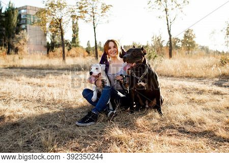 Young Informal Woman Walks With Her Dogs In The Park. Strong Fighting Dogs Pit Bull And Staff Terrie