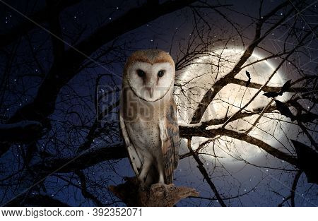 Owl On Tree In Forest Under Starry Sky With Full Moon At Night