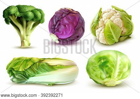 Realistic Set With Fresh White Cabbage Broccoli Chinese Leaves Cauliflower Isolated Vector Illustrat