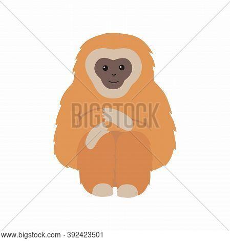 Gibbon Primate Mammal. Monkey Isolated On White Background.