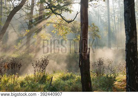 Misty Morning On The River Flowing Through The Forest.\na Small, Narrow, Unregulated River Flowing T