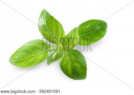 Fresh Green Basil Leaf Isolated On White Background, Close Up. Basil Herb