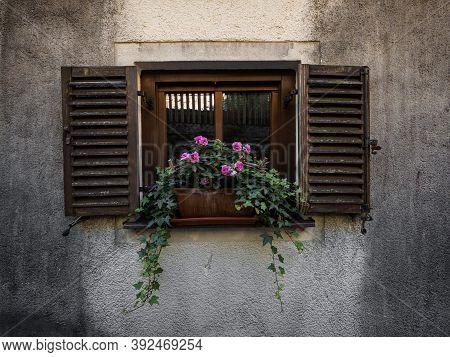 Pink Roses Flower On Window Sill In Village Of Hallstatt In Upper Austria