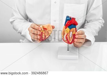 Concept Of Occupation Cardiologist, World Heart Day. Cardiologist Wearing A Medical Coat Showing A H