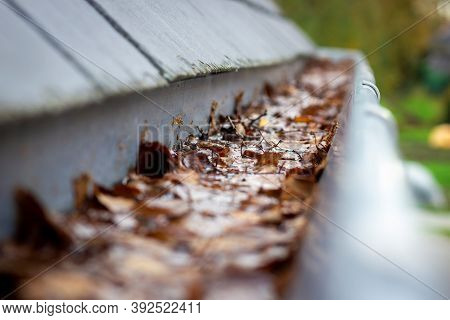 A Portrait Of A Roof Gutter Clogged By Many Fallen Autumn Leaves Hanging From A Slate Roof. This Is