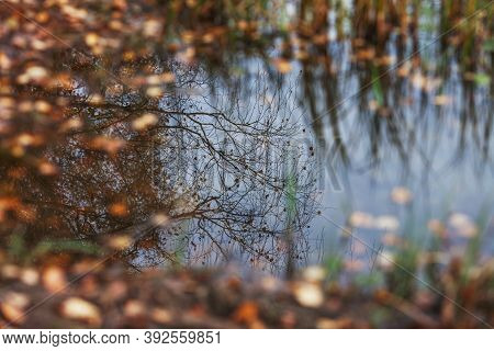 Autumn Leaves In Puddle Of Water.  Reflection Of The Autumn Sky And Trees In A Forest Puddle Among T