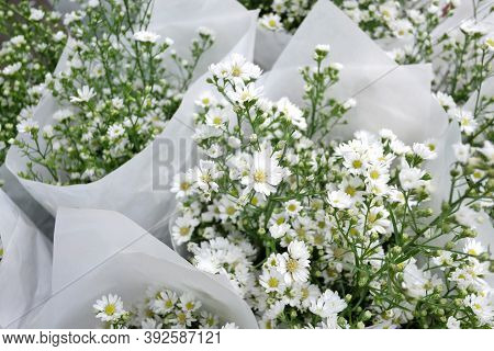 In Selective Focus A Sweet Cutter Aster Flower Blooming In A White Paper Packaging And Selling At Th