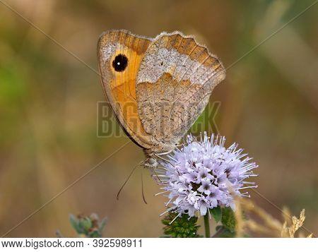 butterfly in natural habitat in spring