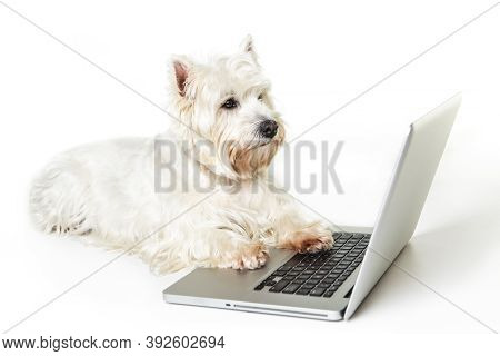 A Westie Dog And Laptop Computer, Isolated On White Background