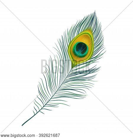 Peacock Feather Isolated Vector Icon, Realistic Bird Plume With Green And Gold Colored Ornament. Bea
