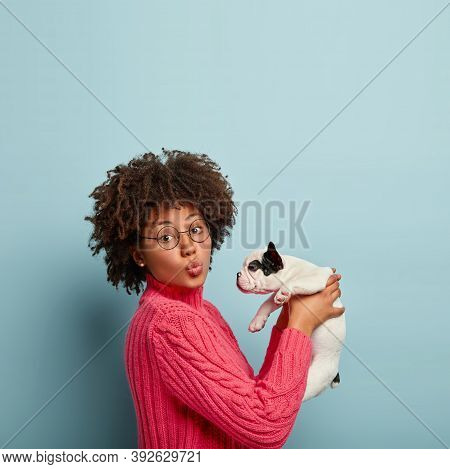 Lovely Young African American Woman Folds Lips, Holds Little French Bulldog In Air Against Blue Back