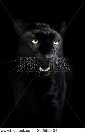 Portrait Of Black Leopard On A Dark Background