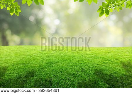 Green Natural View Of Green Leaves And Grass Meadow Field In Public Park With Blurry Image Green Tre