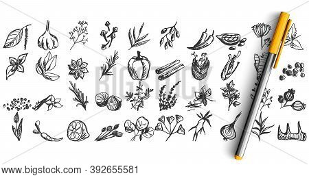 Doodle Set. Collection Of Pen Pencil Chalk Hand Drawn Sketches Templates Patterns Of Different Condi