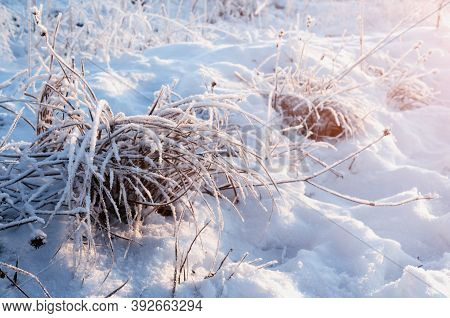 Winter landscape, winter plants covered with winter  ice and frost on the snowy field. Snowy winter meadow scene, winter field in sunny winter day, winter field landscape, winter nature