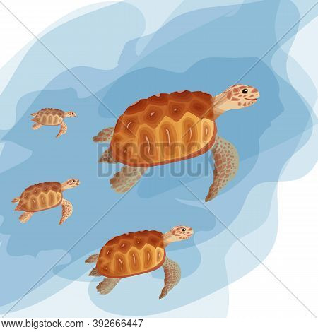 Sea Turtles Swimming In The Water. A Set Of Beautiful Turtles In Beautiful Colors. Clean Water, Envi