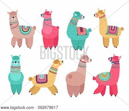 Cute Llama. Funny Alpaca, Cute Llamas Mexican Wildlife Characters. Creative Tribal Wool Animals, Iso