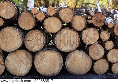 Pile Of Wood Logs On Edge Of Forest. Wooden Logs With Forest On Background. Trunks Of Trees Cut And